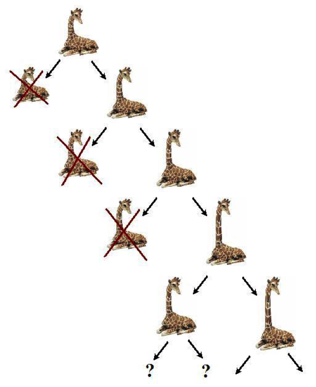 Evolution der Giraffenhälse in vielen Generationen