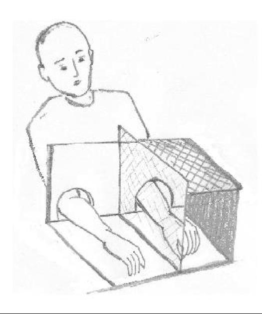Experimente und Fakten zum Thema Bewusstsein